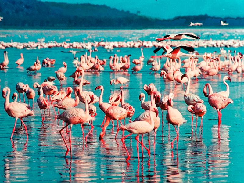 Viaggio Kenya