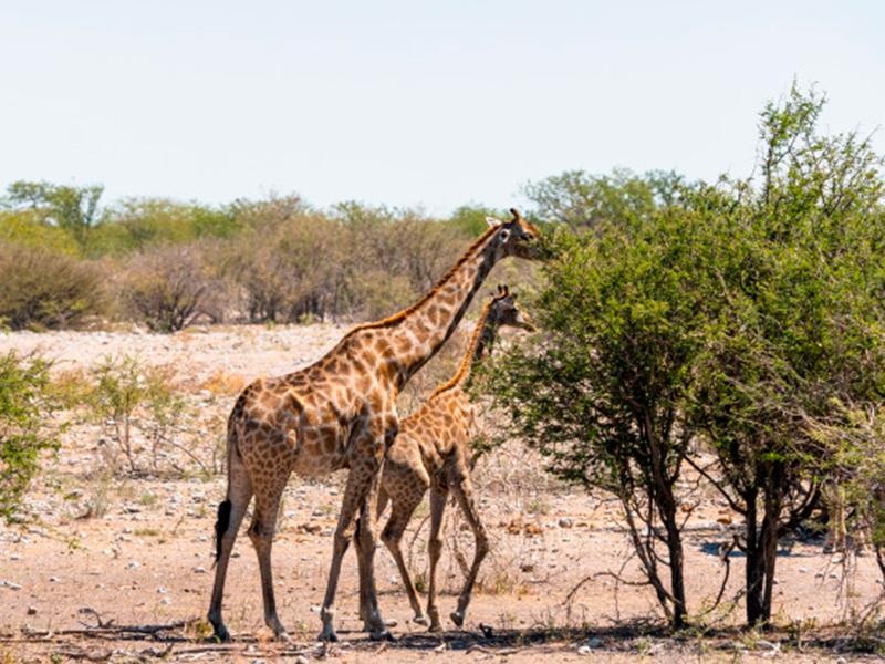 Safari a Watamu: guida e prezzi