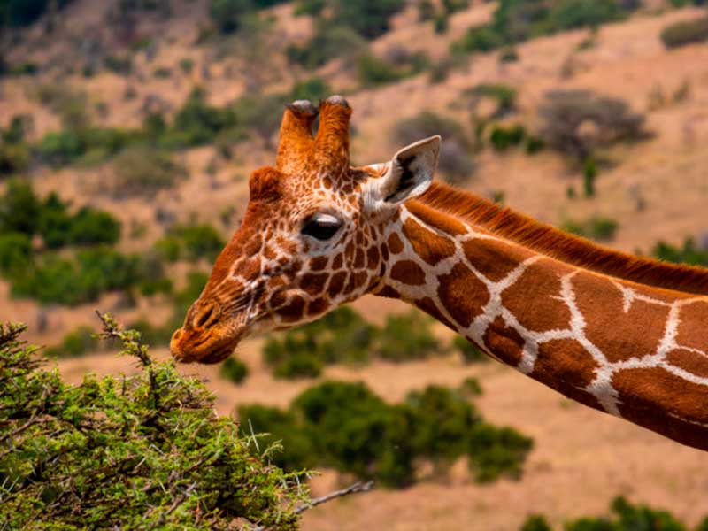 Viaggiare in Kenya: le vaccinazioni sono obbligatorie?