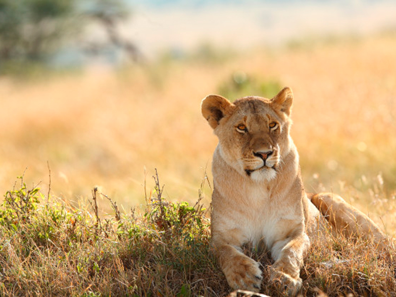 Big Five Safari Tours in Kenya