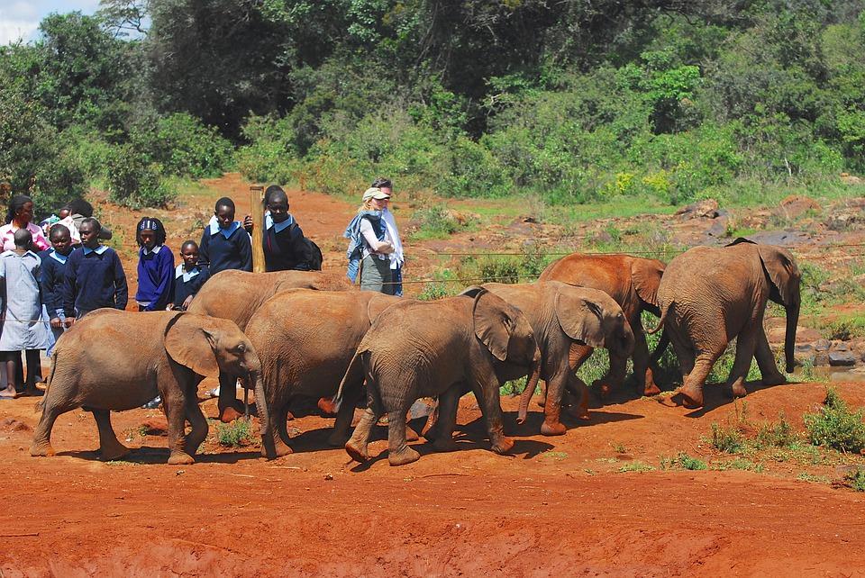 Safari in Kenya con i bambini